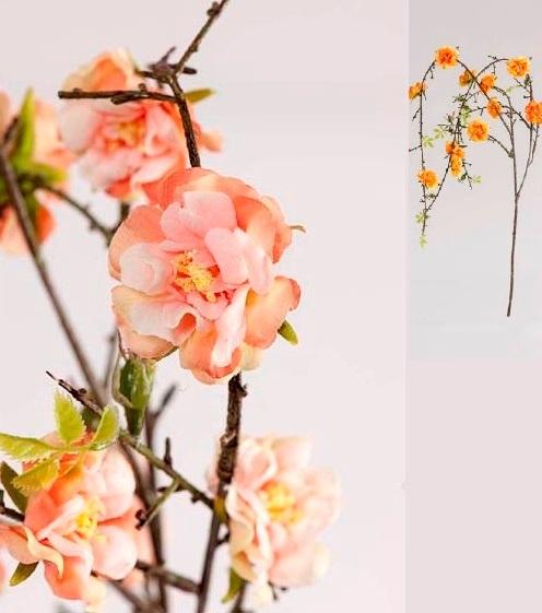 Ветка цветущего шиповника лососевая