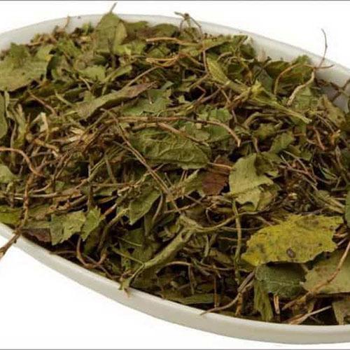Травы Грушанка pyrola-179.jpg