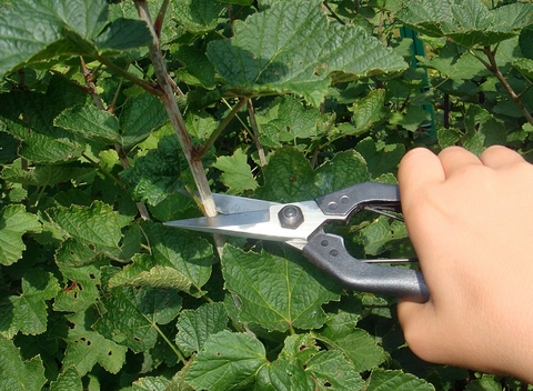 Ножницы для прореживания Okatsune 207