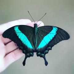 Виды бабочек