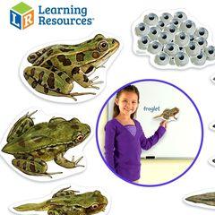 LER6041 Развивающая игрушка Жизненный цикл лягушки (магнитный) Learning Resources