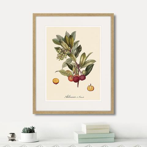 Уолтер Гуд Фитч - Juicy fruit lithography №4, 1870г.