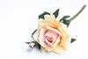 Розово-кремовая роза.