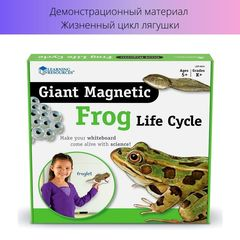 Жизненный цикл лягушки (магнитный) Learning Resources упаковка