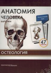 Анатомия человека. Остеология (47 карточек)
