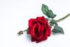 Красная роза.