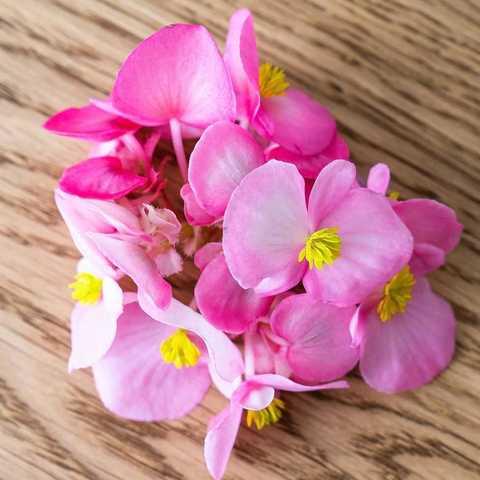 Фотография Бегония (цветы) / 20 шт купить в магазине Афлора