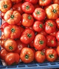 Дебют F1 семена томата детерминантного (Seminis / Семинис)