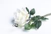 Белая роза.
