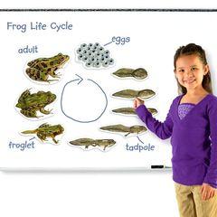 Демонстрационный материал Жизненный цикл лягушки Learning Resources