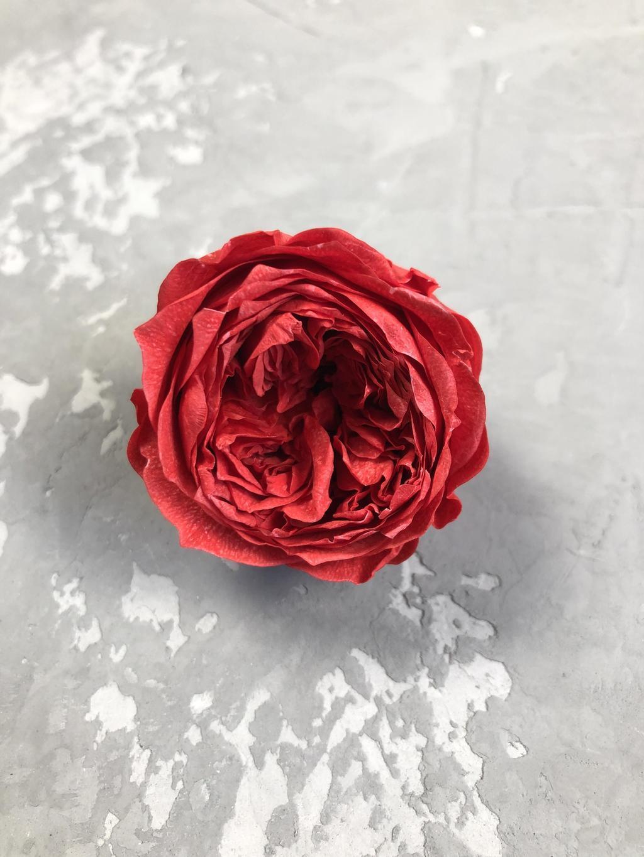 Роза пионовидная красная d=4,5 см