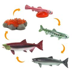 Жизненный цикл лосося Safari Ltd фигурки