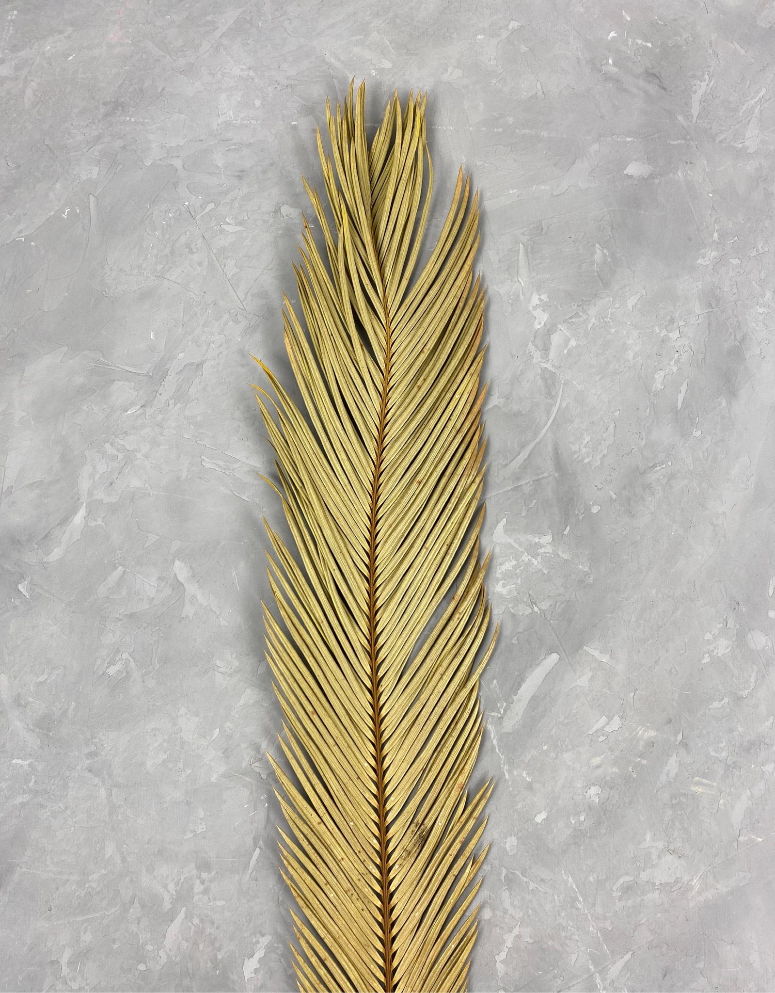 Лист пальмы Цикас натуральный