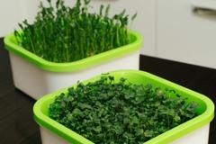 Проращиватель микрозелени Здоровья клад, выращиватель для домашнего использования