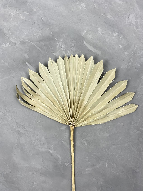 Лист пальмы веером натуральный М