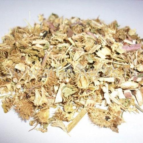 Травы Дурнишник обыкновенный xanthium-200.jpg