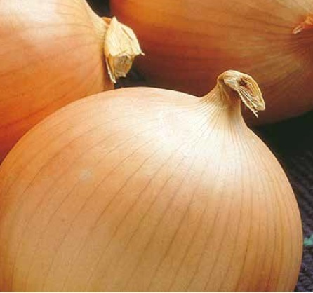Репчатый Барито F1 семена лука репчатого (Seminis / Семинис) барито.jpg