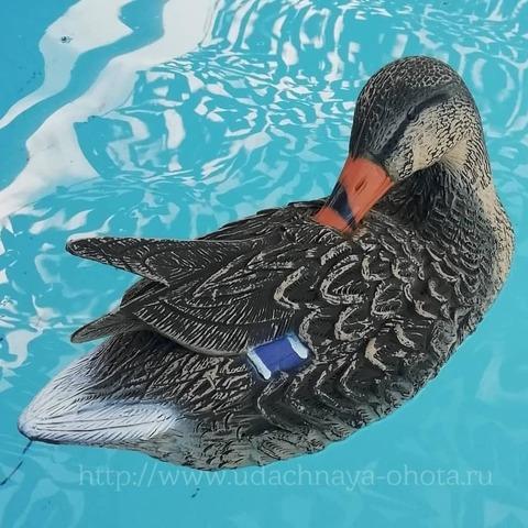 Чучело утки, чистящей перья, Sport Plast