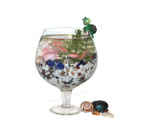 Морские ракушки для декора аквариума