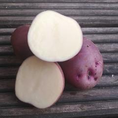 Картофель семенной сорт Синеглазка (1 кг)