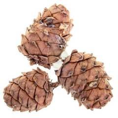 Кедровая шишка с орехами 1 шт.