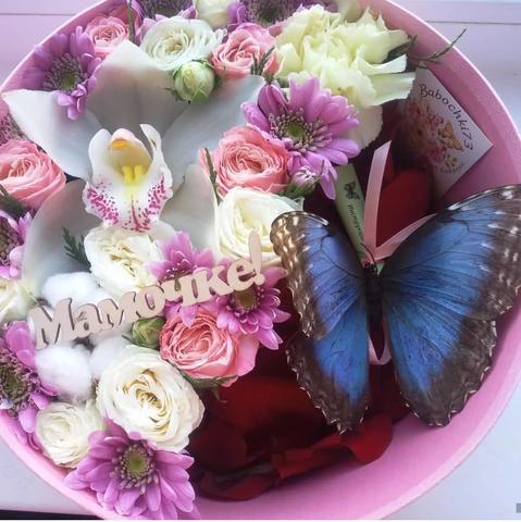 Орхидеи и Морфа в коробке! #1711