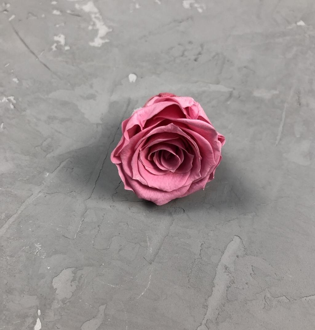 Роза классическая малино-розовая d=3-3,5 см
