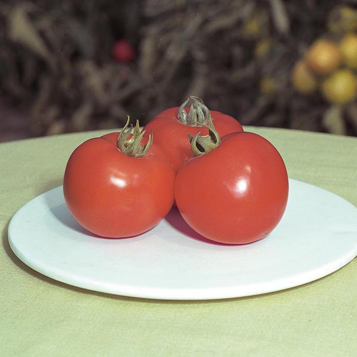 Томат Полфаст F1 семена томата детерминантного (Bejo / Бейо) полфаст_1.jpg
