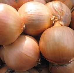 Репчатый Венто F1 семена лука репчатого (Hazera / Хазера) Венто_F1.jpg