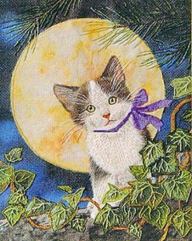Лунный котенок