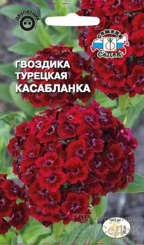 Семена Гвоздика Касабланка, Дв