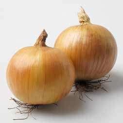 Репчатый Дакапо F1 семена лука репчатого (Hazera / Хазера) Дакапо_F1.jpg