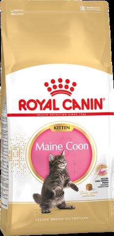 Royal Canin Kitten Maine Coon для котят породы мейн-кун