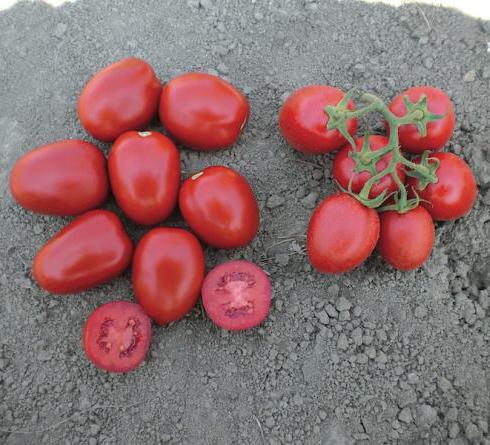 Красный Милта F1 семена томата процессингового (Clause / Клос) МИЛТА_F1.jpg