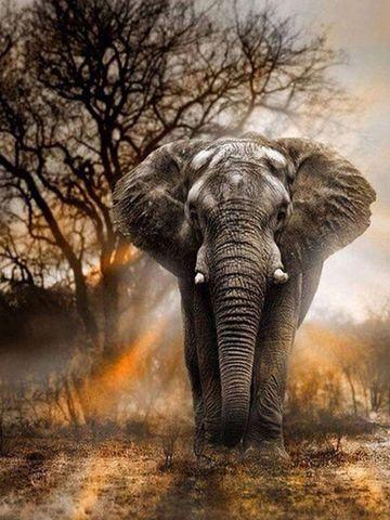 Алмазная Мозаика 50x65 Слон в дикой природе