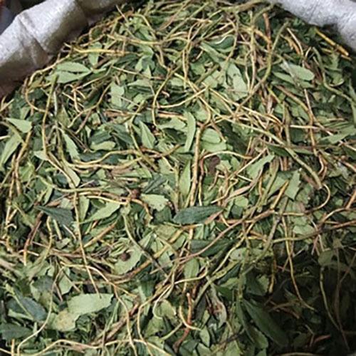 Травы Зимолюбка зонтичная chimaphila-240.jpg