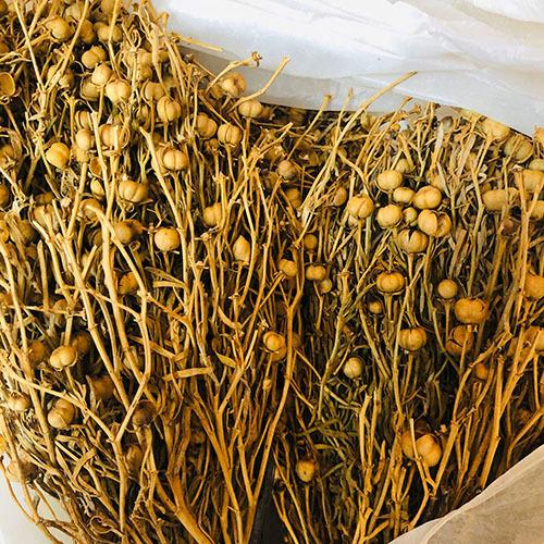 Травы Гармала обыкновенная (Могильник) peganum-142.jpg