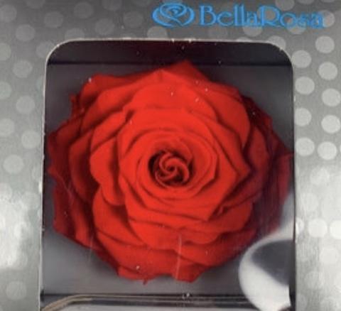 Стабилизированный Бутон Белла Роза Квин (BellaRosa Queen) Эквадор (Диаметр 6.0-6.8см)