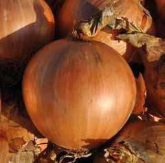 Тареско F1 семена лука репчатого (Hazera / Хазера)