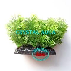 Растение Атман PP-083C, 10см