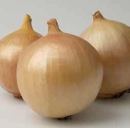 Репчатый Франциско семена лука репчатого (Hazera / Хазера) Франциско.jpg