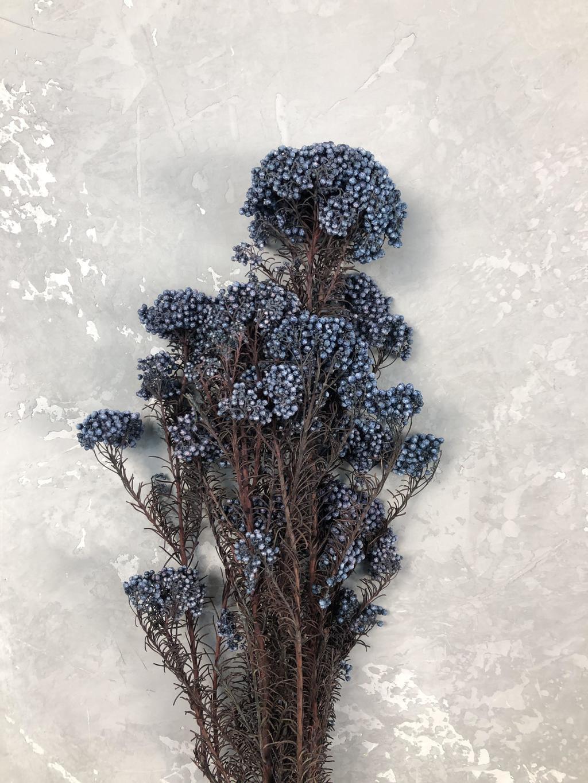 Озотамнус стабилизированный синий
