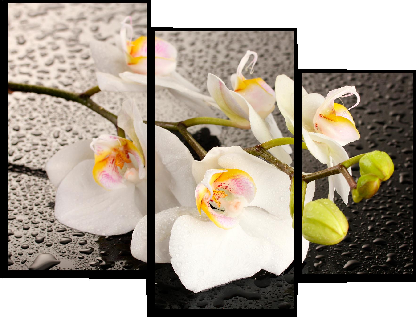 """Цветы Модульная картина """"Белые лепестки"""" М679.png"""