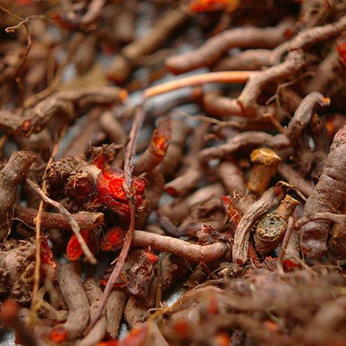 Травы Марена красильная, корень rubia-421.jpg