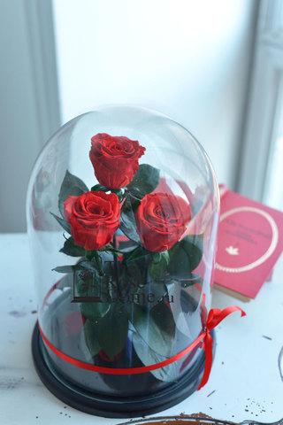 Роза Трио Оптом Выс*Диам*Бутон (32*22*3х7см) Цвет красная