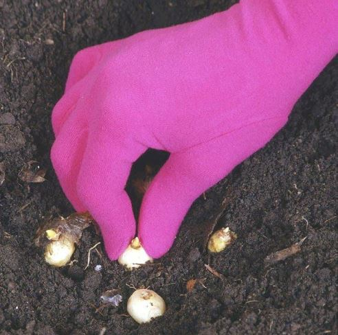 Перчатки садовые FOXGLOVES ORIGINAL фуксия