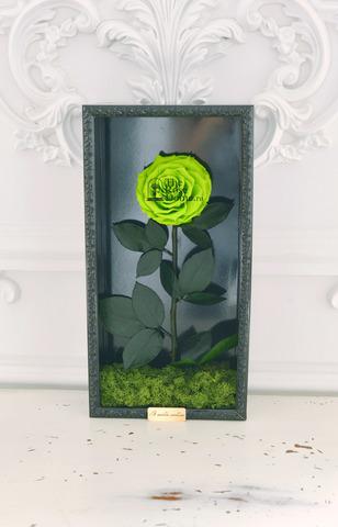 Стабилизированная Роза в Картине Premium Оптом Размер*Бутон (44х22х8см*11см) Цвет зеленый