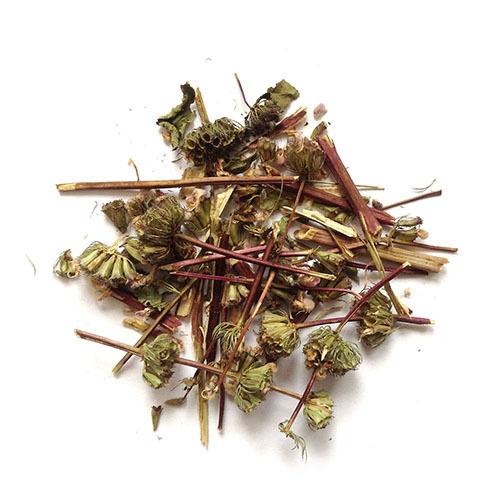 Травы Зопник клубненосный phlomis-255.jpg