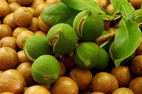 Натуральное масло Макадамии