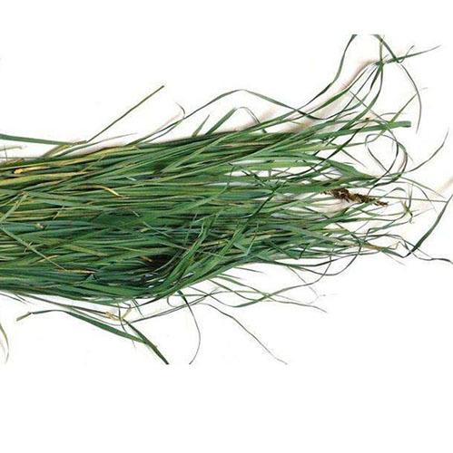 Травы Зубровка hierochloe-259.jpg